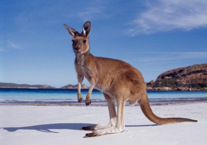 Как долететь до Австралии