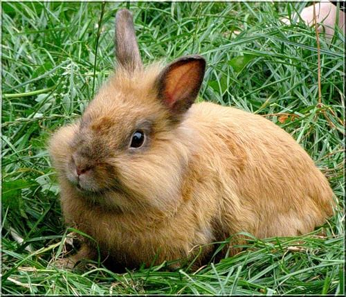 Как кормить крольчат