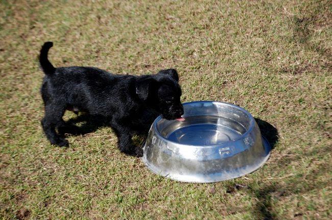 Как кормить щенка не кормом
