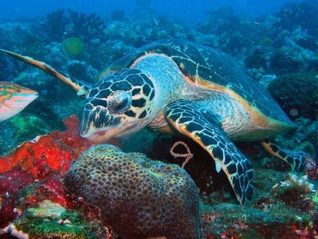 Как кормить водяных черепах