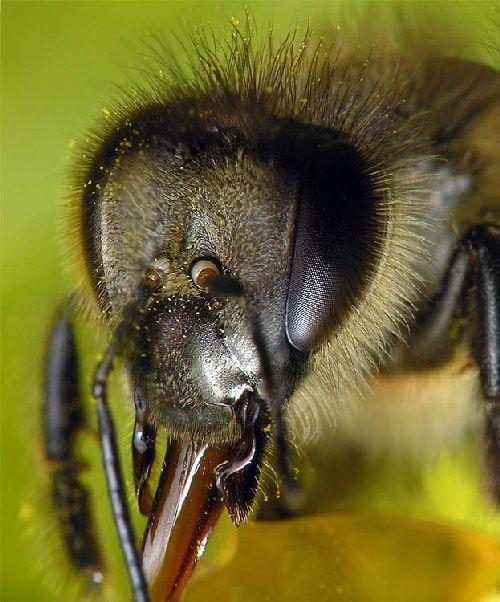 Как подкормить пчел зимой