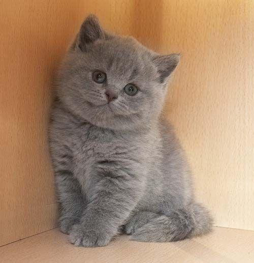 котята обычные