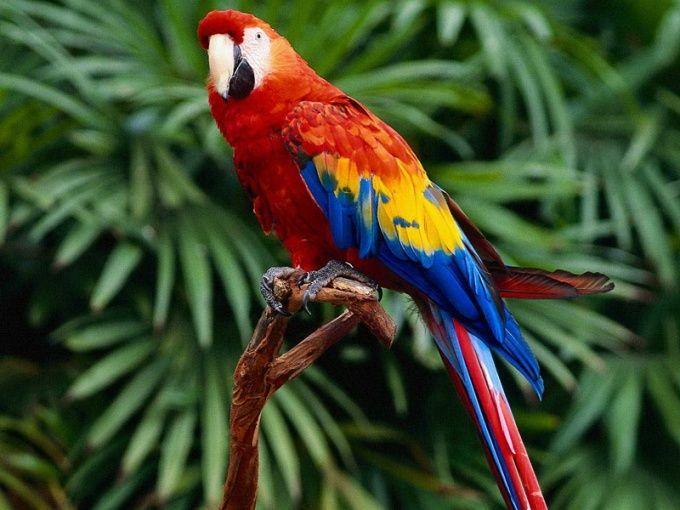 Как лечить попугая