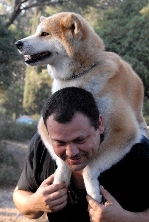 Как любить свою собаку