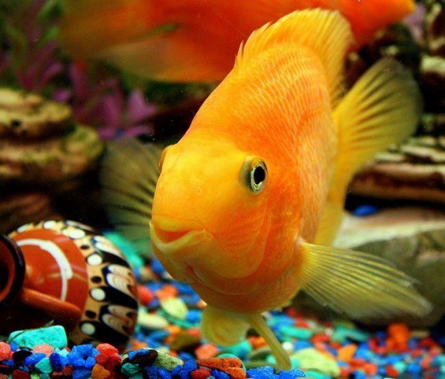 Как можно назвать рыбу