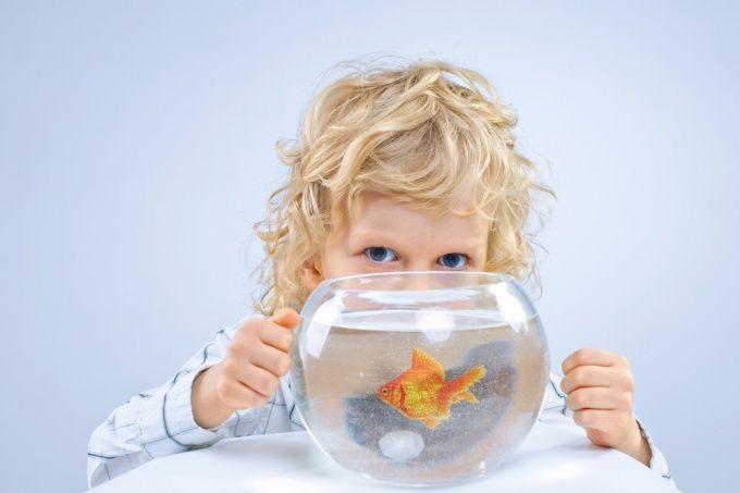 Как мыть аквариум