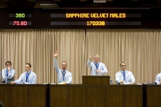 Как оформить заявку на участие в аукционе