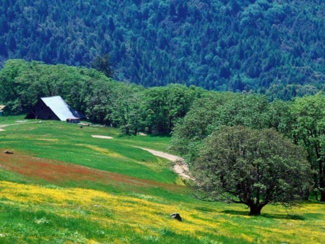 Как оформить землю в собственость