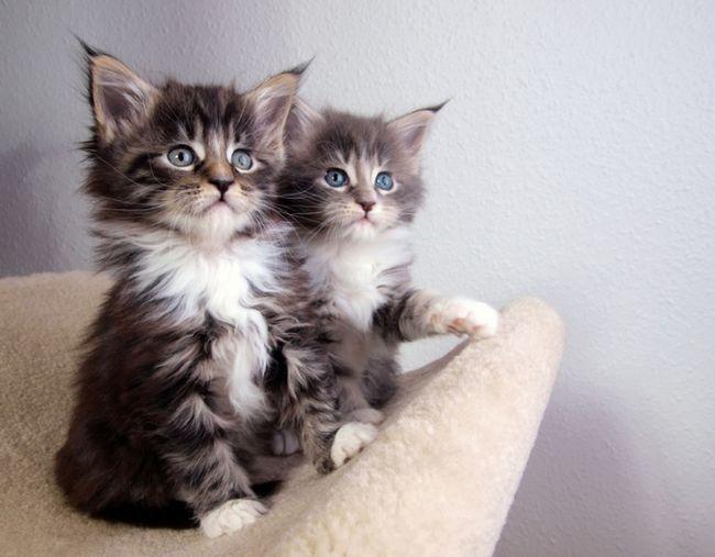 как определить кот или кошка?!