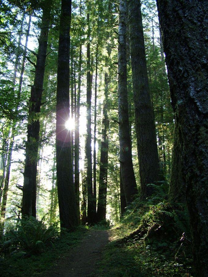 Как ориентироваться в лесу одному