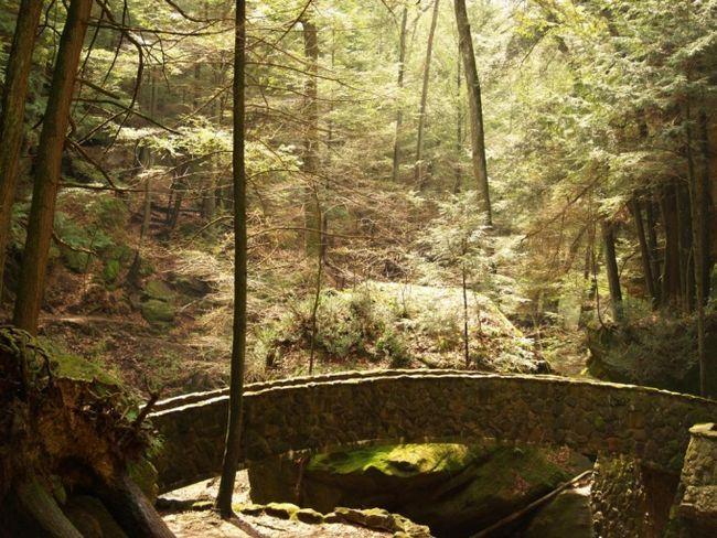 Как отдохнуть в лесу