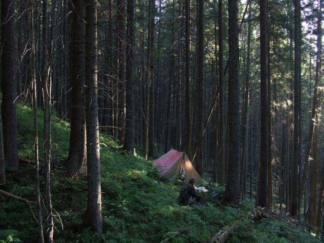 Как переночевать в лесу