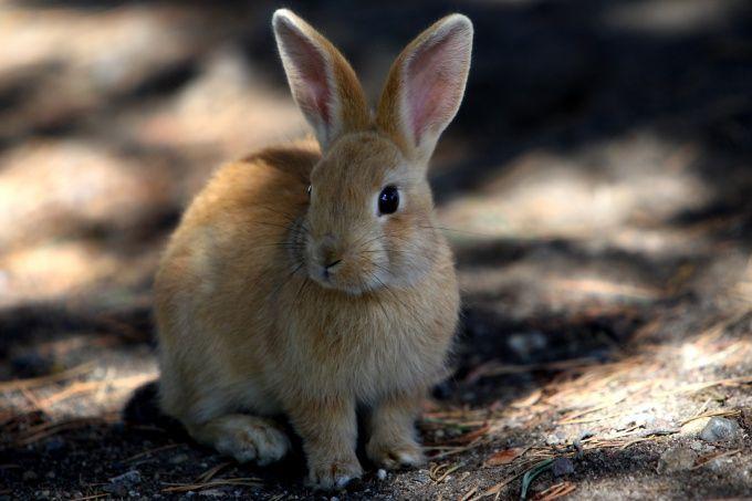 Как ставить петлю на зайца
