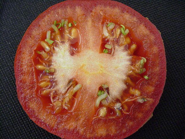 Как получить семена