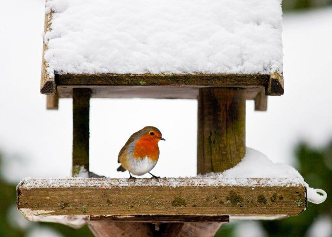 Как сделать кормушку для птиц