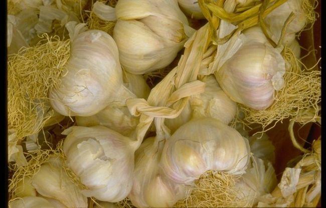 Как приготовить настойку из чеснока