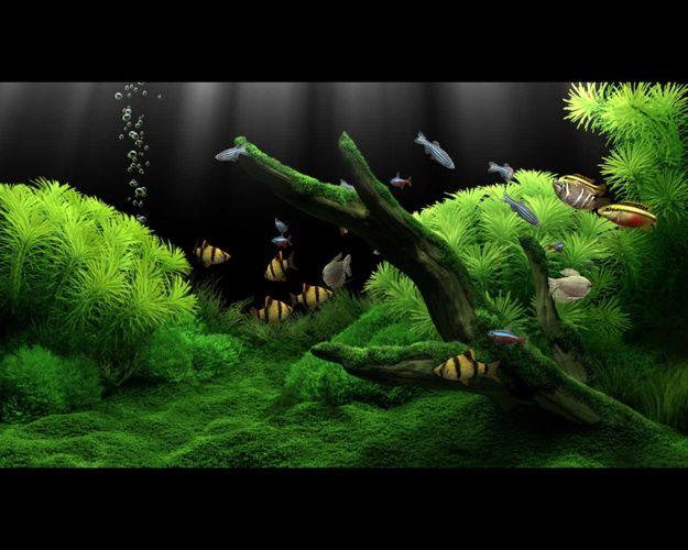Как приклеить фон к аквариуму