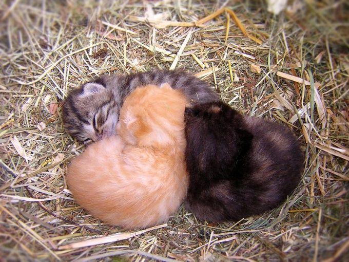 Как принять роды у кошки