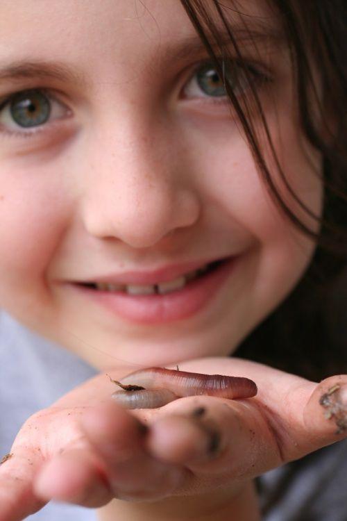 Как развести дождевых червей