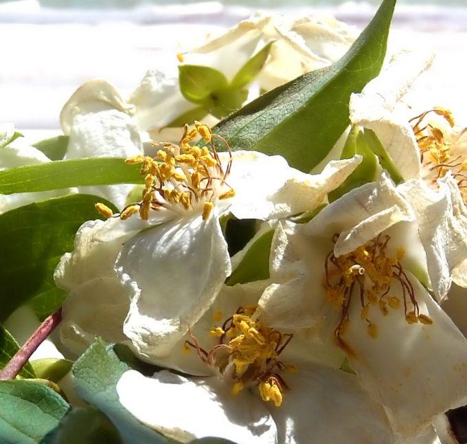 Как реанимировать цветы