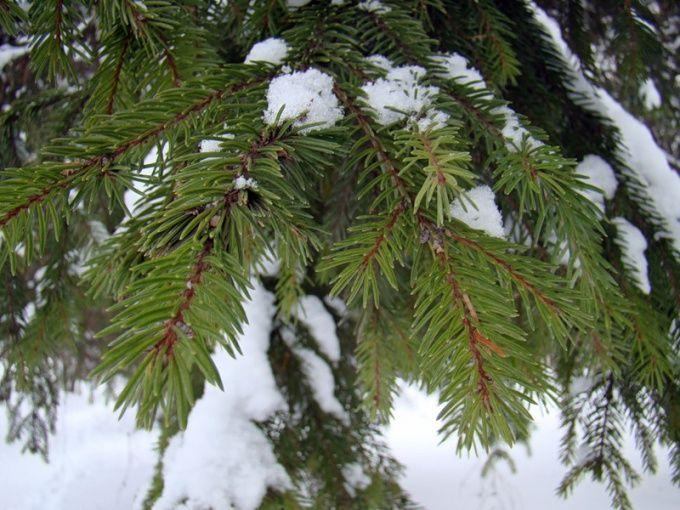 Как сделать елку из ветки