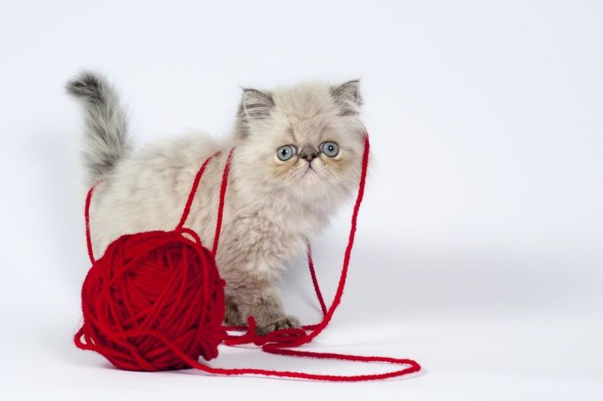 Как сделать игрушку для кошки своими руками