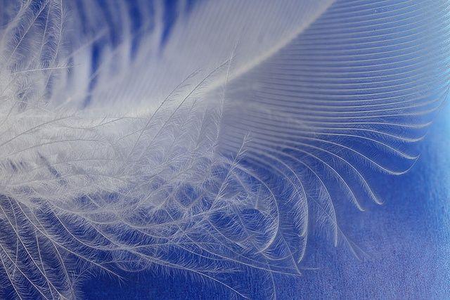 Как сделать панно из перьев