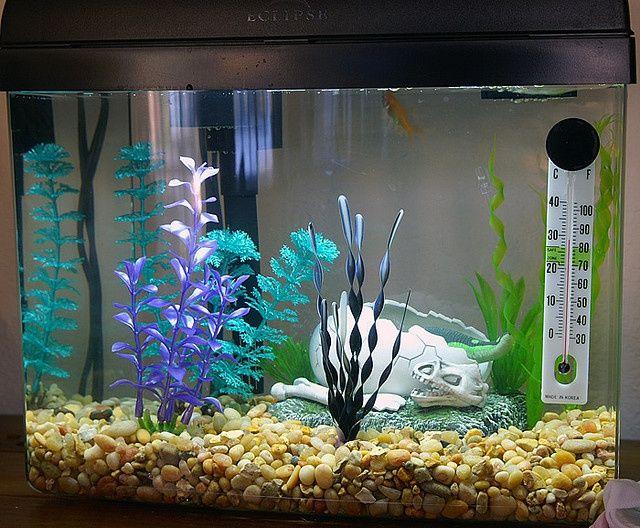 Как украсить аквариум