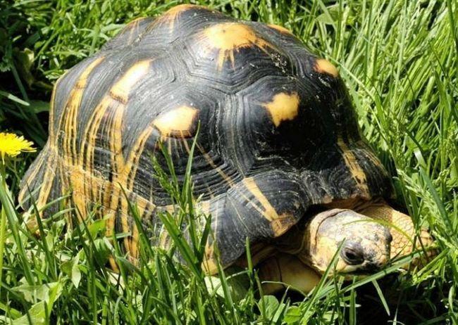 Как вывести черепаху из спячки