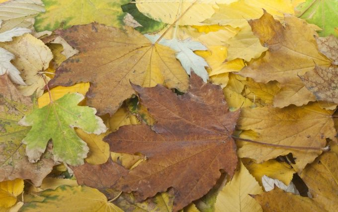 Как сохранить гербарий