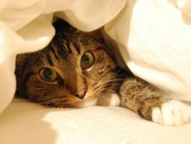 Как сшить одеяло
