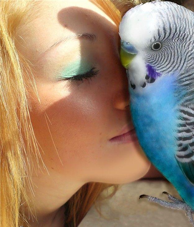 Как учить говорить попугаев