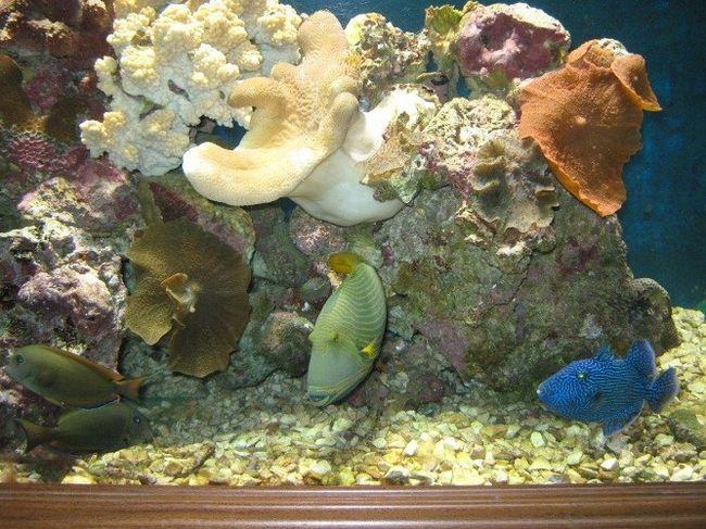 Как уложить грунт в аквариум