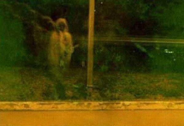 Как увидеть призрака