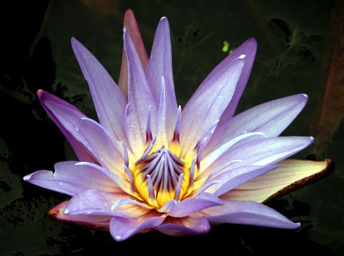 Как узнать, что за цветок