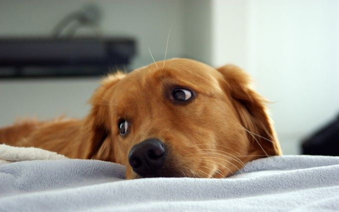 Как определить породу собак