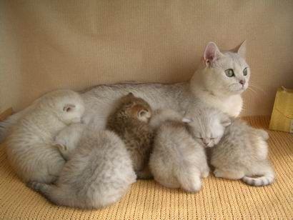 как случить кошку с котом в первый раз