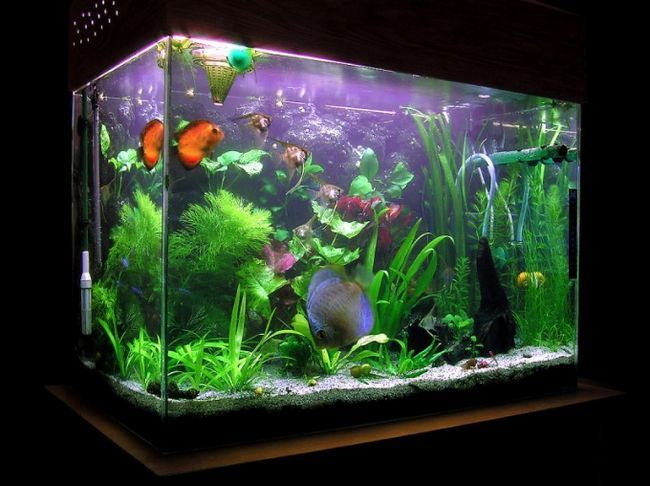 Как починить аквариум