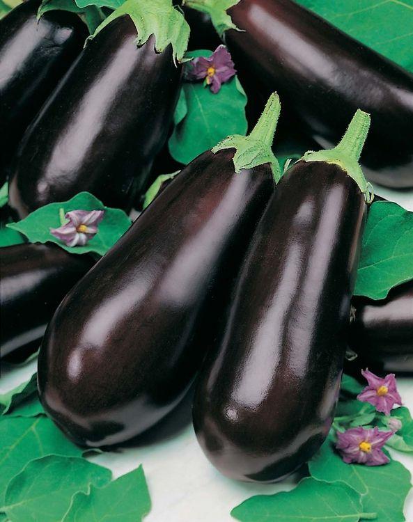 Как выращивать баклажаны