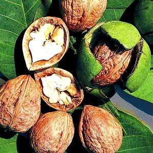Как вырастить орех