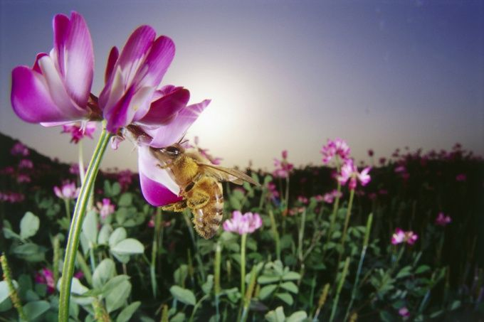 Как заняться пчеловодством