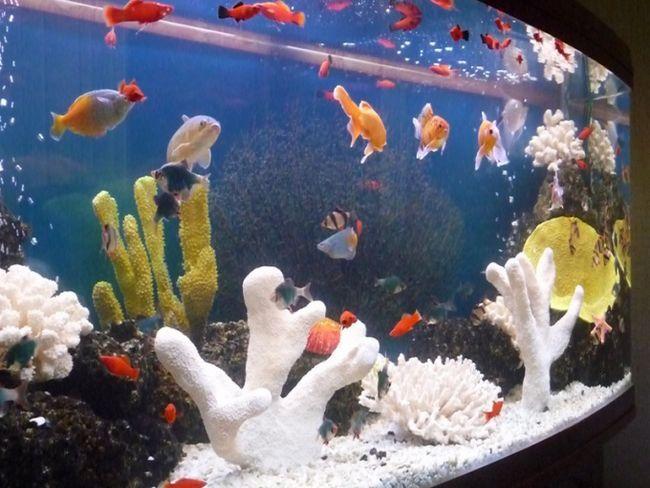 Как заселять аквариум