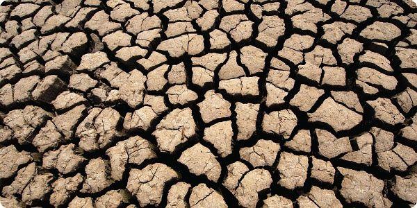 Как защитить почву