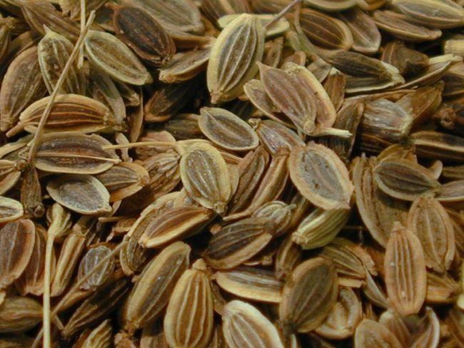 Как заваривать укропное семя