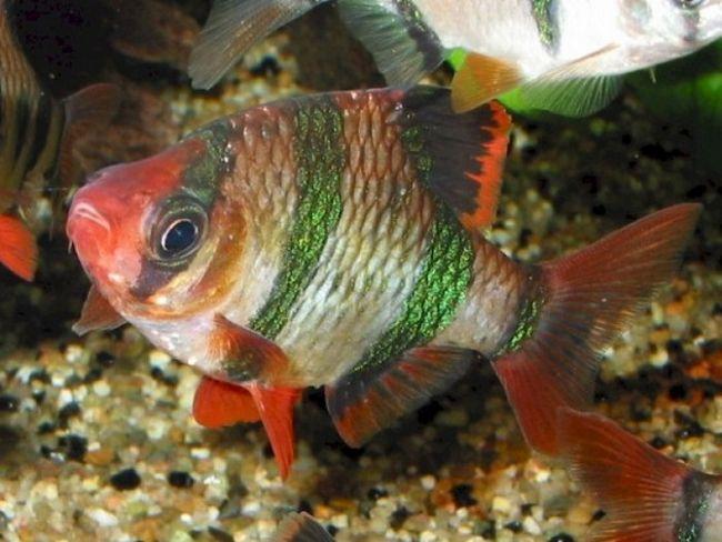 Почему рыбки выпрыгивают из аквариума
