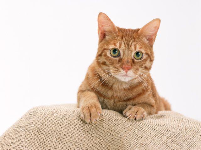 Как кормить кастрированных котов