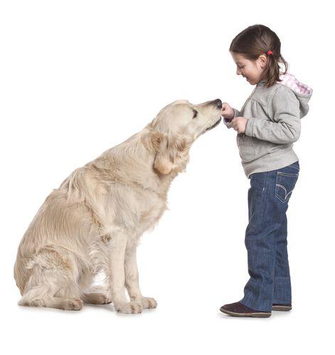 Как обучить собаку