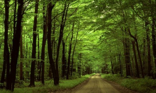 Как охранять лес