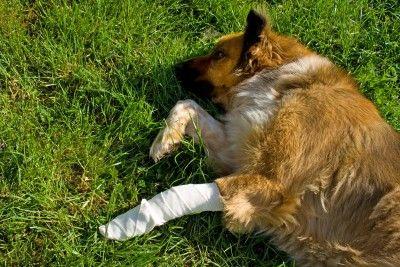 Как остановить кровь у собаки