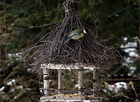 Как помочь птицам